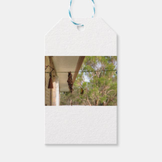 OLIVE BACKED BIRD QUEENSLAND AUSTRALIA GIFT TAGS