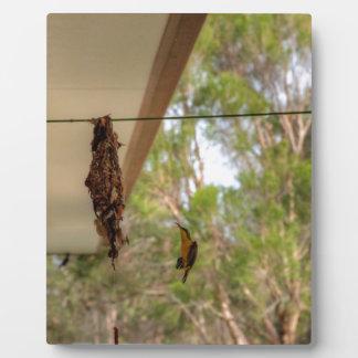 OLIVE BACKED BIRD QUEENSLAND AUSTRALIA PLAQUE
