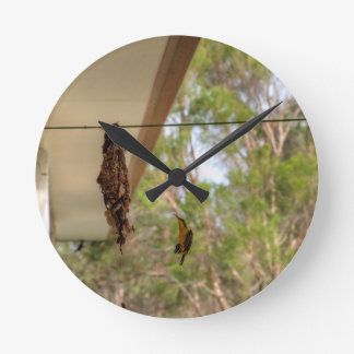 OLIVE BACKED BIRD QUEENSLAND AUSTRALIA ROUND CLOCK