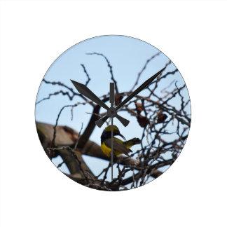 OLIVE BACKED BIRD RURAL QUEENSLAND AUSTRALIA WALL CLOCKS
