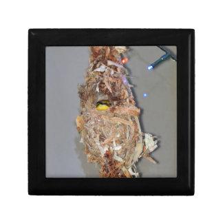 OLIVE BACKED SUNBIRD IN NEST AUSTRALIA GIFT BOX