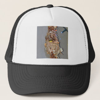 OLIVE BACKED SUNBIRD IN NEST AUSTRALIA TRUCKER HAT