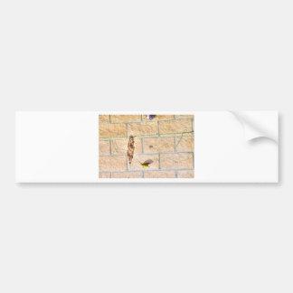 OLIVE BACKED SUNBIRD QUEENSLAND AUSTRALIA BUMPER STICKER