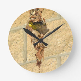OLIVE BACKED SUNBIRD QUEENSLAND AUSTRALIA CLOCK