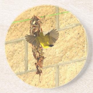 OLIVE BACKED SUNBIRD QUEENSLAND AUSTRALIA COASTER