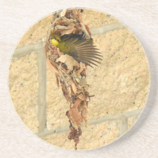 OLIVE BACKED SUNBIRD QUEENSLAND AUSTRALIA COASTER