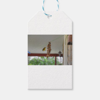 OLIVE BACKED SUNBIRD QUEENSLAND AUSTRALIA GIFT TAGS