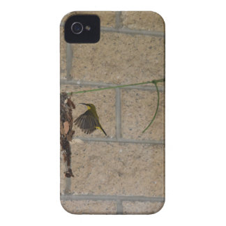 OLIVE BACKED SUNBIRD QUEENSLAND AUSTRALIA iPhone 4 CASE