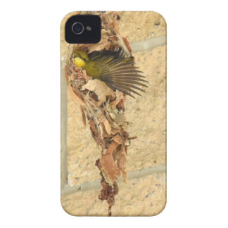 OLIVE BACKED SUNBIRD QUEENSLAND AUSTRALIA iPhone 4 COVER