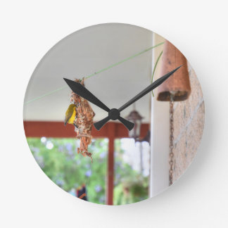OLIVE BACKED SUNBIRD QUEENSLAND AUSTRALIA ROUND CLOCK