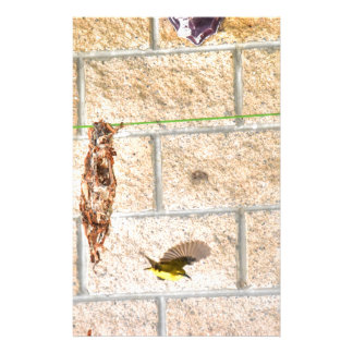 OLIVE BACKED SUNBIRD QUEENSLAND AUSTRALIA STATIONERY