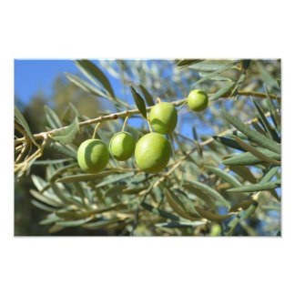 Olive branch photo print