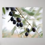 Olive branch poster