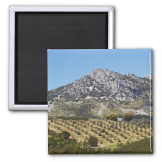 Olive Groves Square Magnet