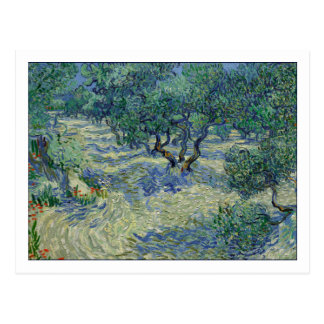 Olive Orchard by van Gogh Postcard