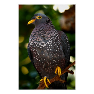 Olive Pigeon Canvas Print