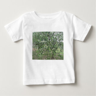 Olive tree branches with first buds Tuscany, Italy Baby T-Shirt