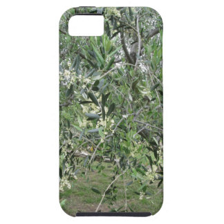 Olive tree branches with first buds Tuscany, Italy Case For The iPhone 5