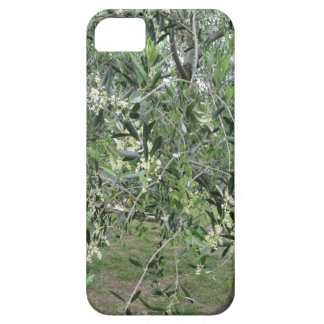 Olive tree branches with first buds Tuscany, Italy iPhone 5 Cover