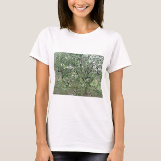 Olive tree branches with first buds Tuscany, Italy T-Shirt