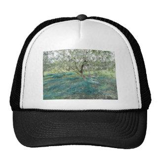 Olive tree in the garden cap