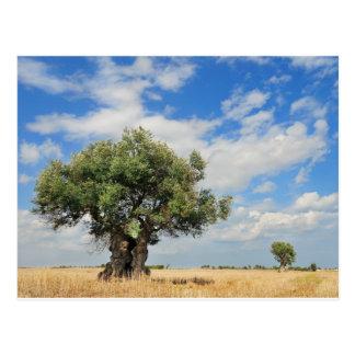 Olive tree postcard