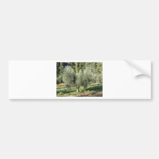 Olive trees in a sunny day. Tuscany, Italy Bumper Sticker