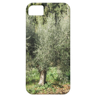 Olive trees in a sunny day. Tuscany, Italy Case For The iPhone 5