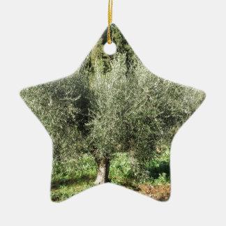 Olive trees in a sunny day. Tuscany, Italy Ceramic Ornament
