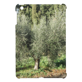 Olive trees in a sunny day. Tuscany, Italy Cover For The iPad Mini