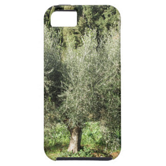 Olive trees in a sunny day. Tuscany, Italy iPhone 5 Case