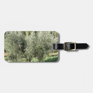 Olive trees in a sunny day. Tuscany, Italy Luggage Tag