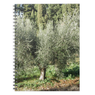 Olive trees in a sunny day. Tuscany, Italy Notebook