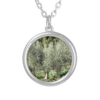 Olive trees in a sunny day. Tuscany, Italy Silver Plated Necklace