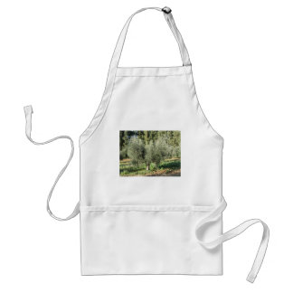 Olive trees in a sunny day. Tuscany, Italy Standard Apron