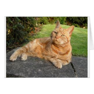 Oliver Cat Card