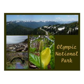 Olympic N.P. (Hurricane Ridge, Kalaloch, Hoh) Postcard