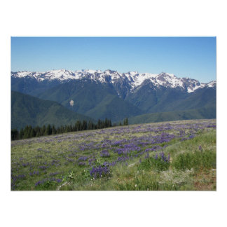 Olympic National Park Landscape Poster