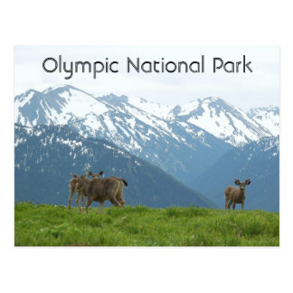 Olympic National Park Wildlife Travel Postcard