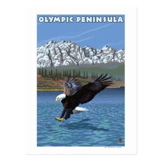 Olympic Peninsula, WashingtonFishing Eagle Postcard