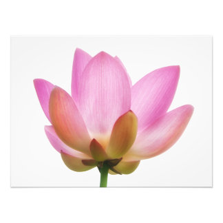 Om Lotus Pink Flower Petals Photo Art