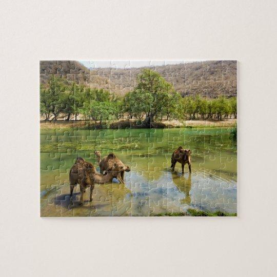 Oman, Wadi darbat, dromedaries pasturing in the Jigsaw Puzzle