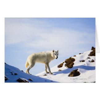 on snow covered terrain card