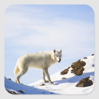 on snow covered terrain square sticker