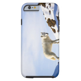 on snow covered terrain tough iPhone 6 case