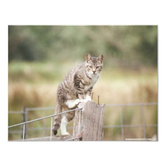 On The Fence Feral Tabby Cat Invitations