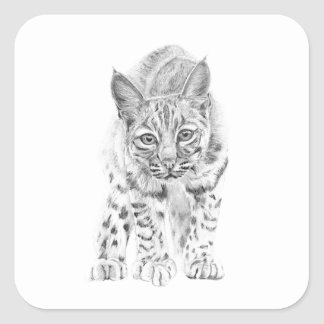 On the Prowl A Young Bobcat Square Sticker