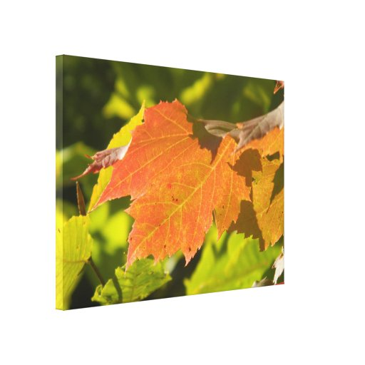 One Autumn Leaf Gallery Wrap Canvas