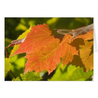 One Autumn Leaf Card