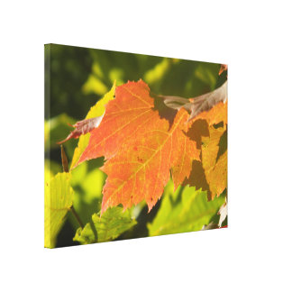 One Autumn Leaf Gallery Wrap Canvas